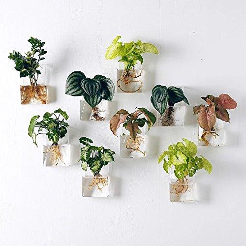 [해외]4 개의 벽 매달린 재배자의 팩 매달린 유리 Terrariums Wall Planters 매달린 꽃 냄비 공기 식물 냄비/Pack of 4 Wall Hanging Planters Hanging Glass Terrariums Wall Planters Hanging