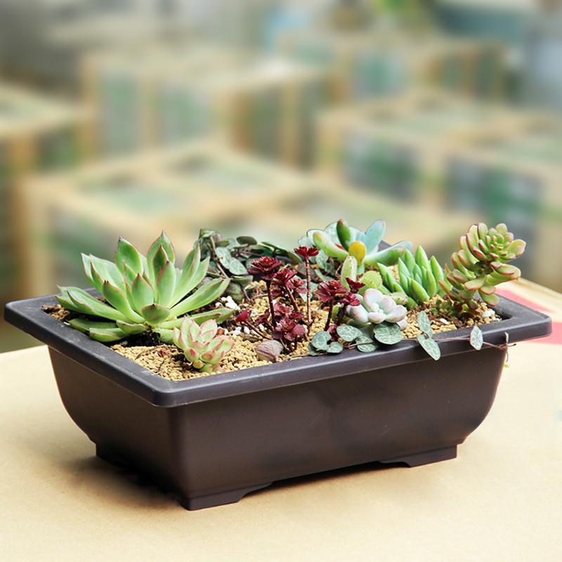 [해외]WHISM 미니 플라스틱 꽃 냄비 직사각형 꽃병 즙이 많은 식물 냄비 발코니 분재 분지 화분 보육 냄비 정원 재배자/WHISM Mini Plastic Flower Pots Rectangle Vase Succulent Plant Pot Balcony Bonsai